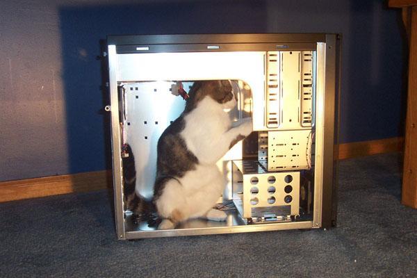 Un chat dans un pc démonté